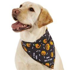f8accac624a Howl-O-Ween Pumpkin Bandanas - Accessories - Bandanas   Scarves Posh Puppy  Boutique