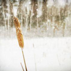 Winter photograph, shabby chic, rustic, nature winter decor, NancyFalsoPhotos via Etsy #fpoe