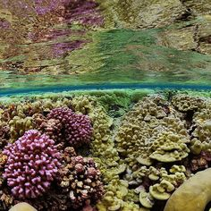 Photo by @BrianSkerry Coral Gardens - A shallow water view of a pristine coral reef located approximately 1000 miles south of Hawaii in a place called Kingman Reef. Because of their remoteness, ecosystems like this have remained largely unspoiled and by studying them we can understand how a healthy coral reef truly functions.  Photographed #onassignment for @natgeo.  @thephotosociety @natgeocreative