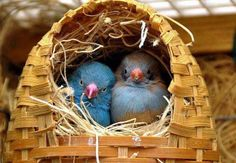 Two birds in their house