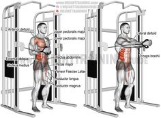 Cable horizontal Pallof press. An isometric isolation and pull exercise. Target muscles: Internal and External Obliques. Stabilizers, core and legs: Rectus Abdominis, Psoas Major, Erector Spinae, Tensor Fasciae Latae, Gluteus Medius, Hip Adductors. Stabilizers, near arm: Pectoralis Major, Pectoralis Minor, Anterior Deltoid. Stabilizers, far arm: Middle and Lower Trapezius, Rhomboids, Lateral Deltoid, Posterior Deltoid, and Triceps Brachii.