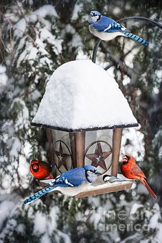 Bird feeder in winter with blue jays and cardinals. By Elena Elisseeva