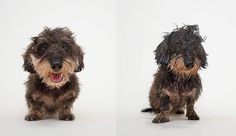 Dogs photographed after their baths know how you feel on a bad hair day