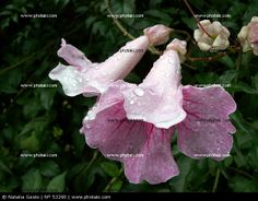 http://www.photaki.com/picture-wet-pink-flowers_53260.htm