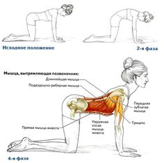 plank exercise muscles used  plank exercise muscles used