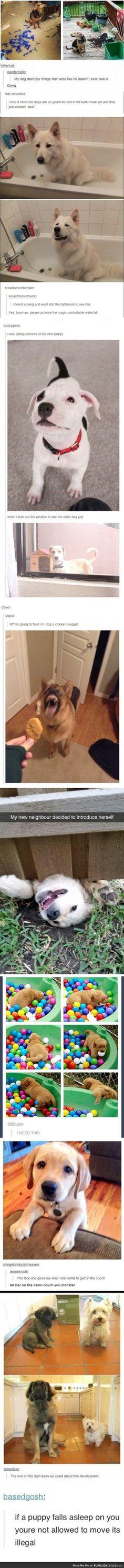 Tumblr Dog edition.