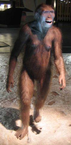 Australopithecus afarensis. A reconstruction of a female.