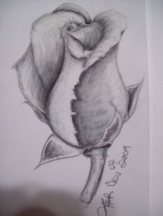 soft blakc charcoal and white charcoal pencils on paper ^-^ rose sketch 2 Nature Sketches Pencil, Flower Sketches, Pencil Art Drawings, Art Drawings Sketches, Drawing Flowers, Rose Drawings, Rose Sketch, Sketch 2, Sketch Drawing