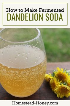 This dandelion soda recipe is naturally fermented with a ginger bug, giving it a distinctive flavor and natural fizz! Make in the spring when dandelions are abundant for an all-natural homemade soda. Dandelion Uses, Dandelion Jelly, Dandelion Recipes, Fermentation Recipes, Homebrew Recipes, Ginger Bug, Kefir Recipes, Soda Recipe, Eat Seasonal