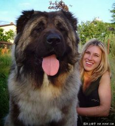 10 Dogs who are bigger than their owners. I want all of these!