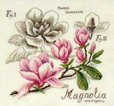 Étude au Magnolia à broder au point de croix DFEA HS28 ''Magnolia''