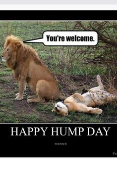 It's Hump Day Smile And Have A Phenomenal Day.  Like the Lion Said, You're Welcome.  #BELIEVE #FREEDOM