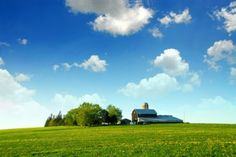 highquality pictures of grass and a tree house blue sky and white clouds