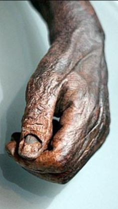 Bog Hand: Amazingly preserved!