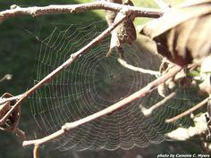Small Spider Web (2 inch diameter)