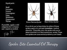 Patti's Place: Spider Bite Essential Oil Therapy
