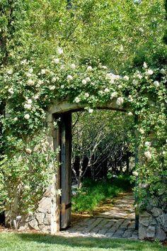 A walk through the garden!
