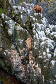 Hunters by Michael helmets ~ The little bear got in trouble, but made it up the cliff :)