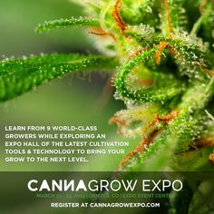 A two-day educational expo dedicated to the art & science of growing cannabis.   Book before 2/27 for the best hotel rates!    www.CannaGrowExpo.com for details and to register!