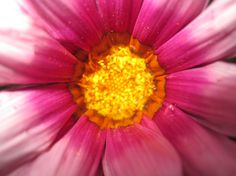 This pink and yellow flower is presented in full color and detail in this original photograph. This original picture was captured in a beautiful Michigan garden by Brittany Valente for Dream By Day Creations.  http://www.dreambydaycreations.com