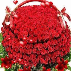 Clique sur l'image ! Beautiful Flowers Photos, Beautiful Flowers Pictures, Flower Pictures, Beautiful Roses, Rose Color Meanings, Coeur Gif, Photo Colour, Ornament Wreath, Nature Photos
