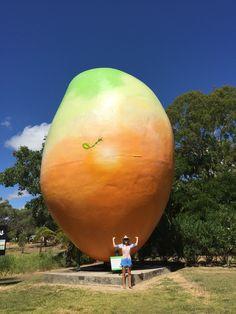 Big Bowen mango QLD
