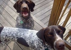 Pet Proofing:  Best Tips for Dog-Friendly Design?   Good Questions