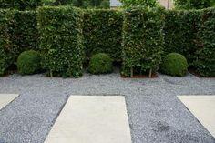 Welke hagen plant je in een moderne tuin?