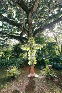 Waimea Valley, Plants, Plant, Planets