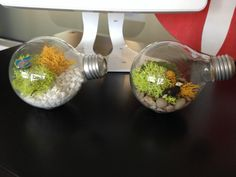 How to make a Lightbulb Terrarium, with Juliette Melton!