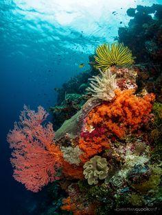 Ocean Underwater, Underwater Creatures, Ocean Creatures, Fauna Marina, Beautiful Sea Creatures, Coral Art, Sea And Ocean, Sea World, Underwater Photography