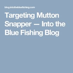 Targeting Mutton Snapper — Into the Blue Fishing Blog