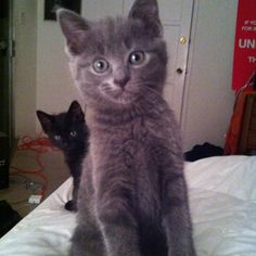 The newest members of the clan! Sophie (upfront and blackie/obi wan) Curious wonders these two!