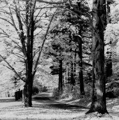 19841000  Automn  forest, Mont Saint Bruno, Québec  ; Photo by Richard Guimond , 1984