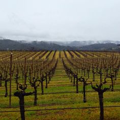 Foggy day // Alexander Valley // Sonoma County #winecountry