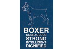 Boxer, Blue on OneKingsLane.com