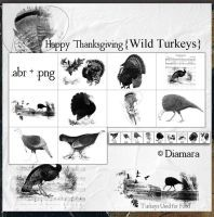 HappyThanksgivingWildTurkeys by Diamara