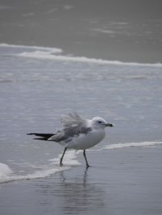 Look who is waiting to see you!#seagulls www.brunswickplantation.com