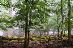 Nebel ziehen durch den Wald - auf http://ronni-shop.fineartprint.de