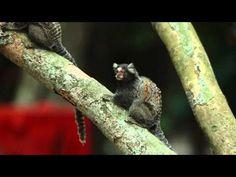 Educação Ambiental - Ep. 1: Ecossistema e desequilíbrio ecológico - YouTube