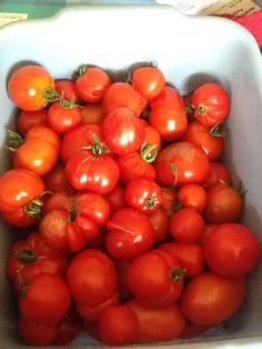 Fresh from the vine Tomatoes