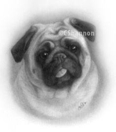 Hand drawn pet portrait of an adorable pug ~ done in plain pencil drawing