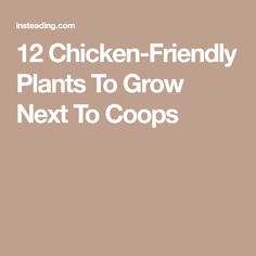12 Chicken-Friendly Plants To Grow Next To Coops