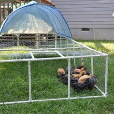 A complete how-to for building a moveable chicken tractor from PVC pipe, designed by the author's husband.