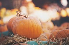 I want to go to a pumpkin patch and pick out pumpkins!
