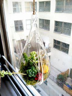 I want this hanging terrarium!