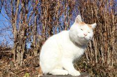 かしかし - かご猫 Blog