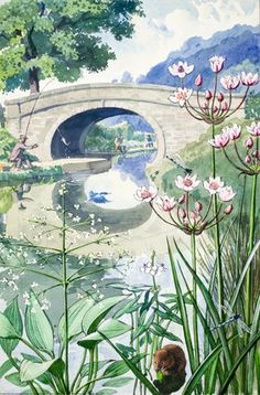 Water-vole by the canal-side. C. F. Tunnicliffe