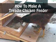 How To Make A Treadle Chicken Feeder - Whether you have a large laying flock or just a few backyard hens, keeping them fed is a regular chore (never mind the expense), especially if the feeder isn't weatherproof and allows rodents and wild birds access. One way to keep the feed safe from spoilage and purloin-age is to keep it covered – but how will the chickens gain access?