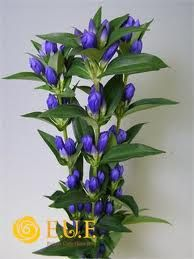 Gentian (possibly useful for tables but may not need it as other blue options)